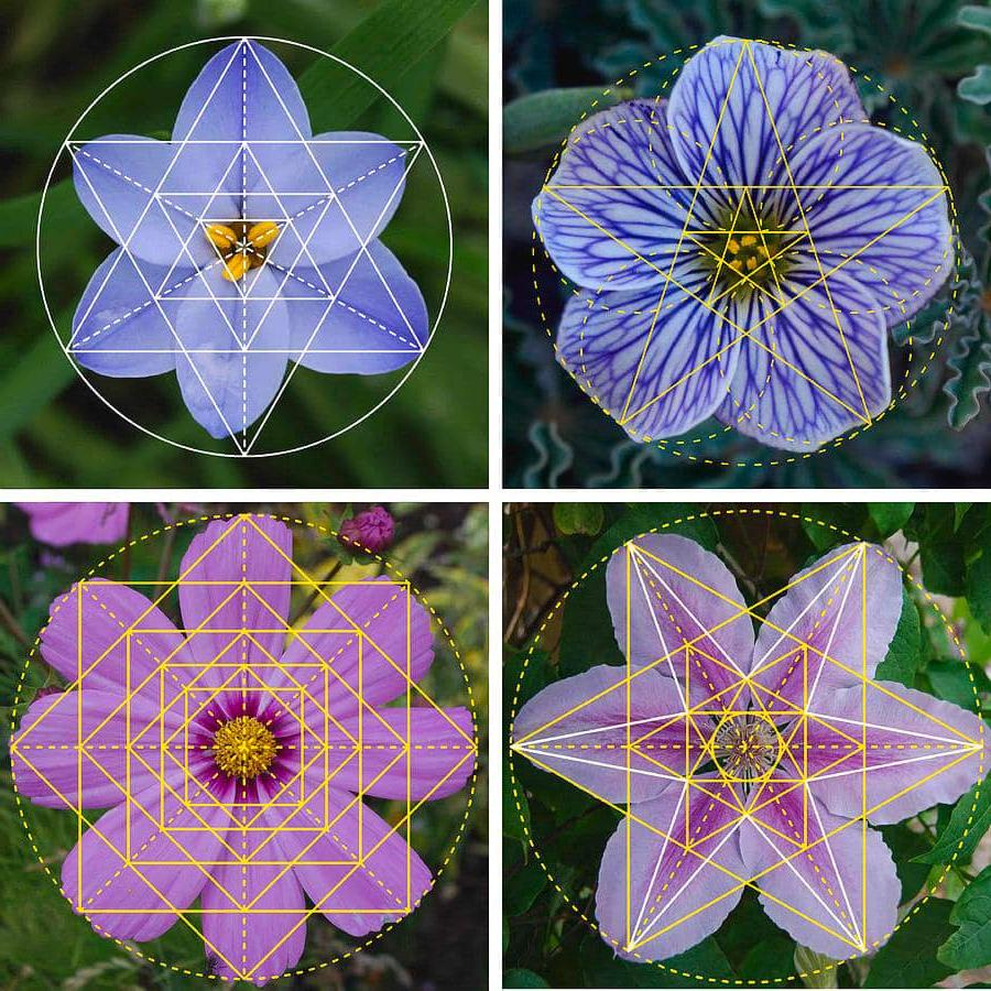 géométrie sacrée nature